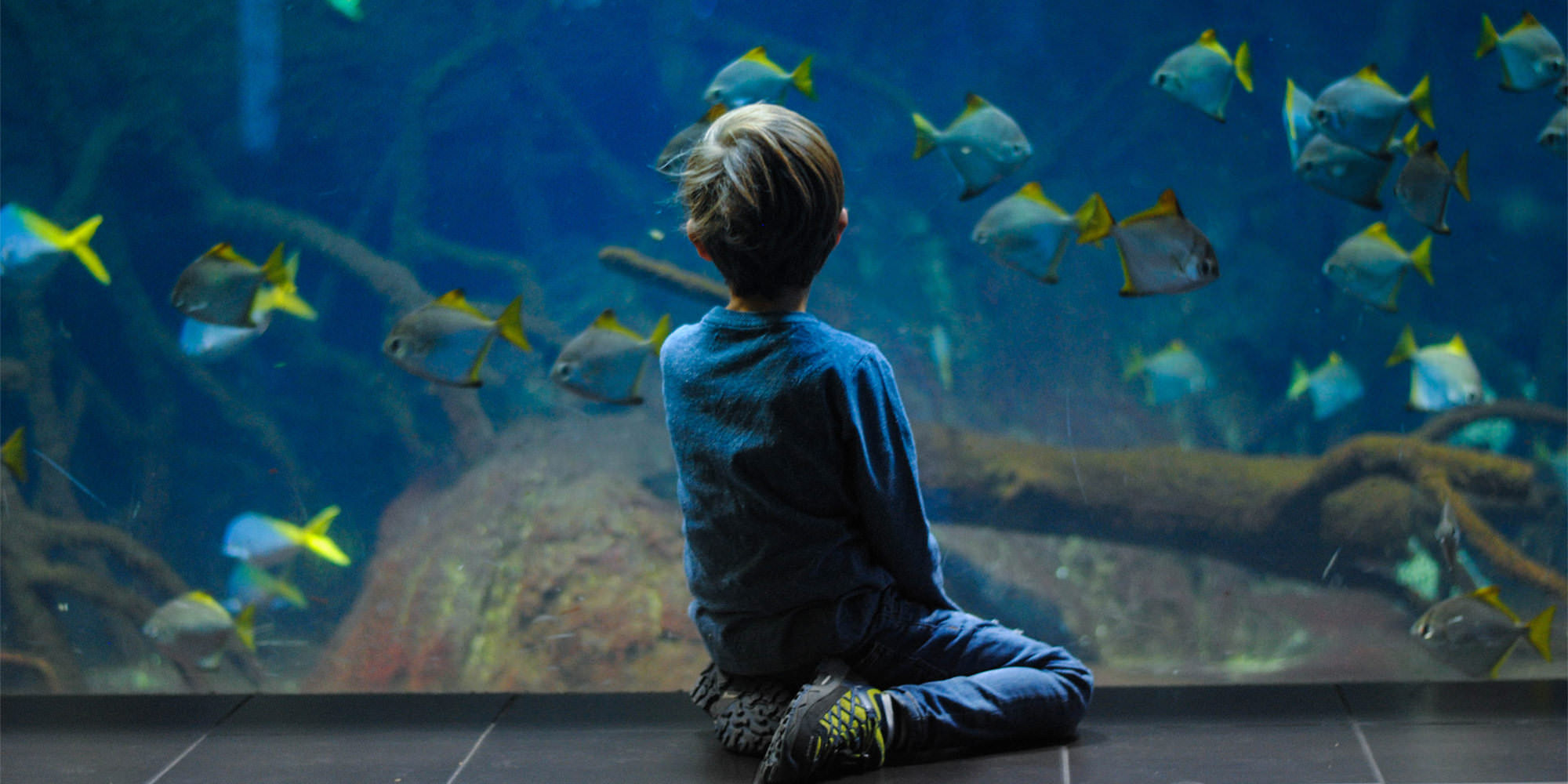 A Caucasian boy with light brown hair sits in front of a big aquarium tank. His back is turned to the camera and he is engrossed in observing the fish.