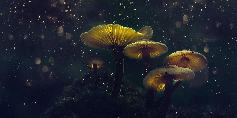 Luminescent yellow mushrooms with pinpricks of light floating around them.